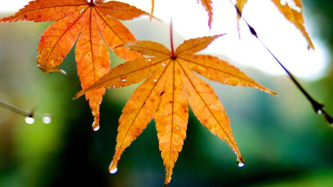 Pogoda na dziś: miejscami słaby deszcz, nawet 17 stopni